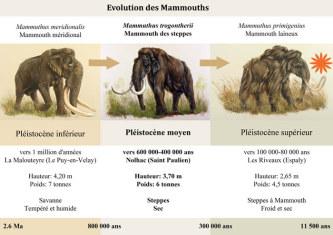 mammouth-velay_mini.jpg
